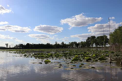 Trester Lake