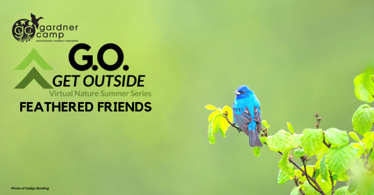 GO Session 3 Feathered Friends FB Cover