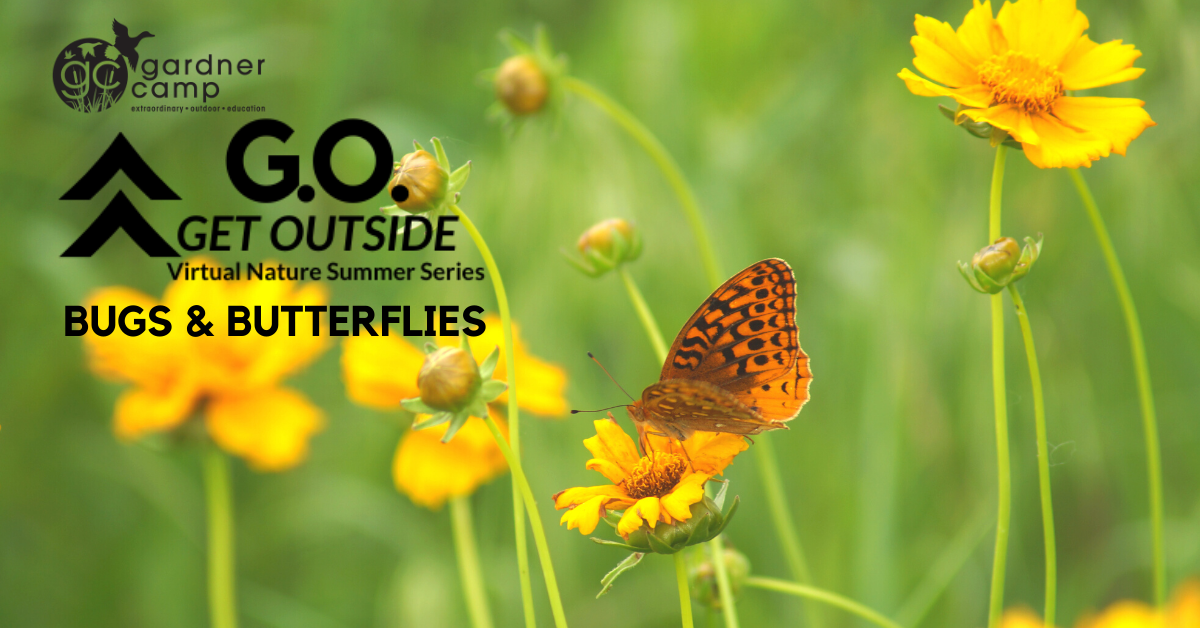 GO Session 5 Bugs Butterflies FB Cover